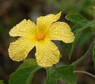 flora de galapagos 2
